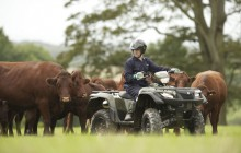 Suzuki Utility ATV - Cattle